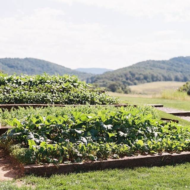 Pippin hill farm and vineyard restaurant north garden va opentable for Hills farm and garden
