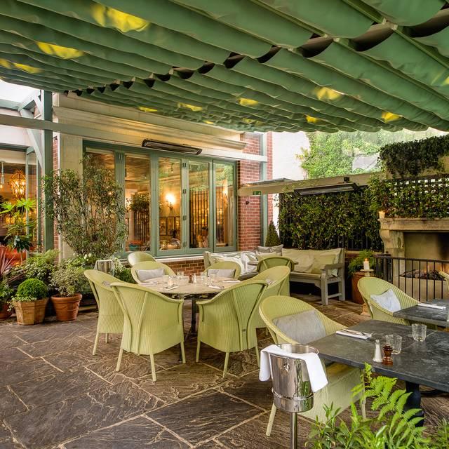Chelsea Garden Ivy
