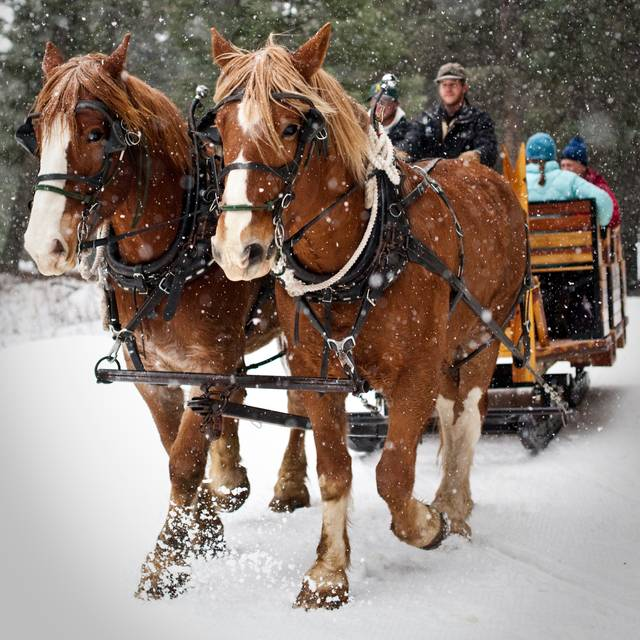 Donaldson - Sleigh Ride at Lone Mountain Ranch, Big Sky, MT