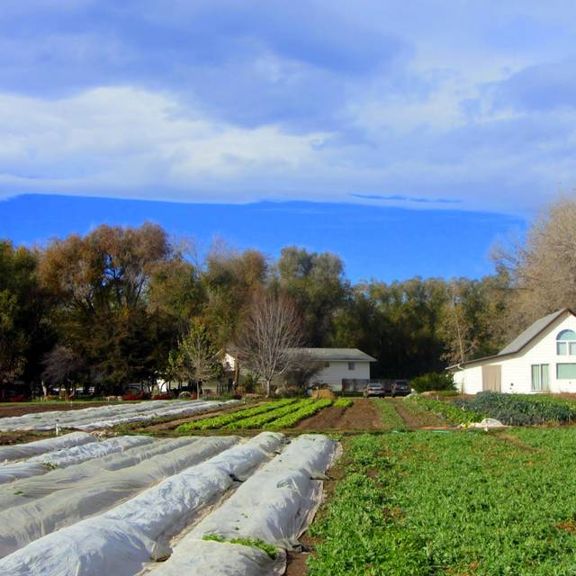 Oxford Farms - Avelina - Denver, Denver, CO