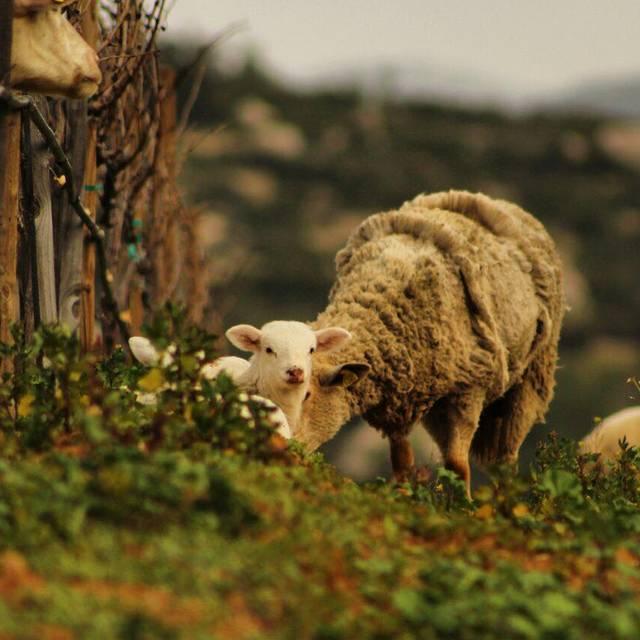 Lamb - Deckman's en el Mogor, Ensenada, BCN