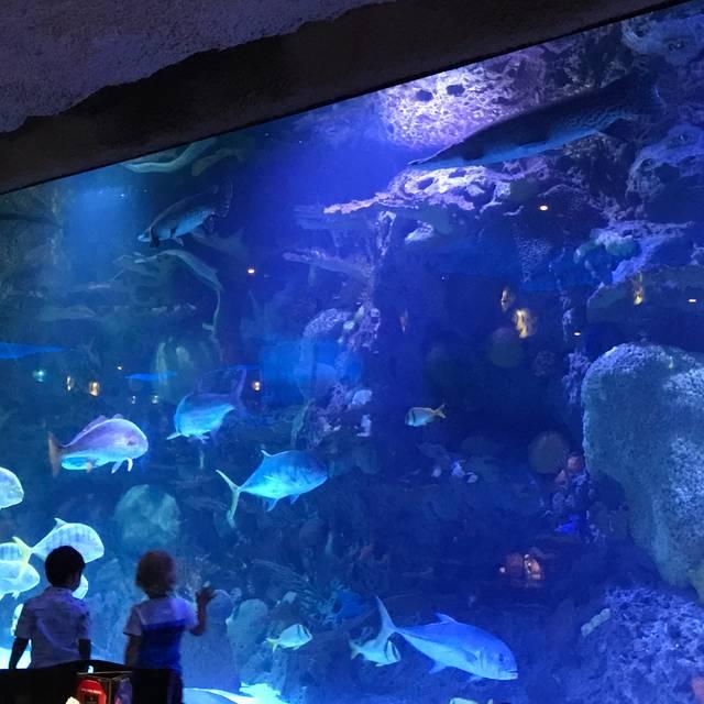 Downtown Aquarium, Houston, TX