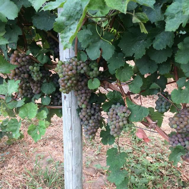 Fitzbistro - Fitzpatrick Family Vineyards, Peachland, BC