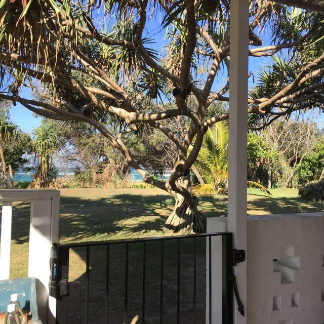 Paper Daisy - Halcyon Cabarita Beach, Cabarita Beach, AU-NSW