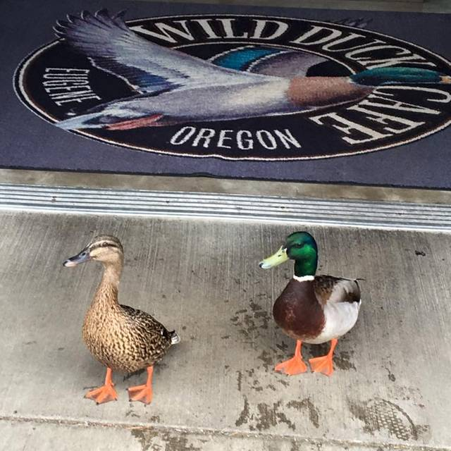 Friendly Visitors - Wild Duck Cafe, Eugene, OR