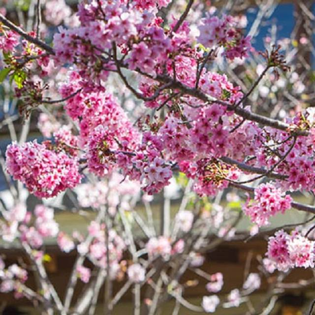 Blossom - Shan Social House, Beverly Hills, CA