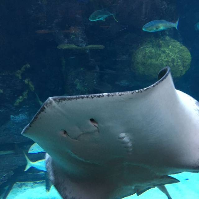 Aquarium Restaurant - Downtown Denver, Denver, CO