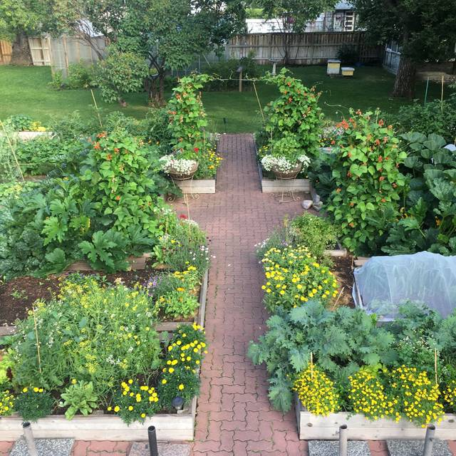 Vegetable Garden - Rouge, Calgary, AB