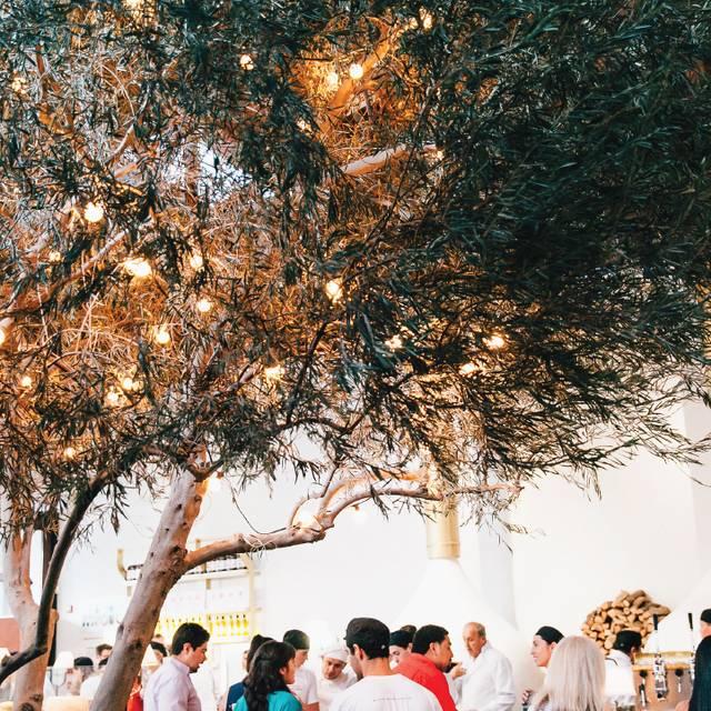Tree Environment - Midici Neapolitan Pizza - El Paso, El Paso, TX