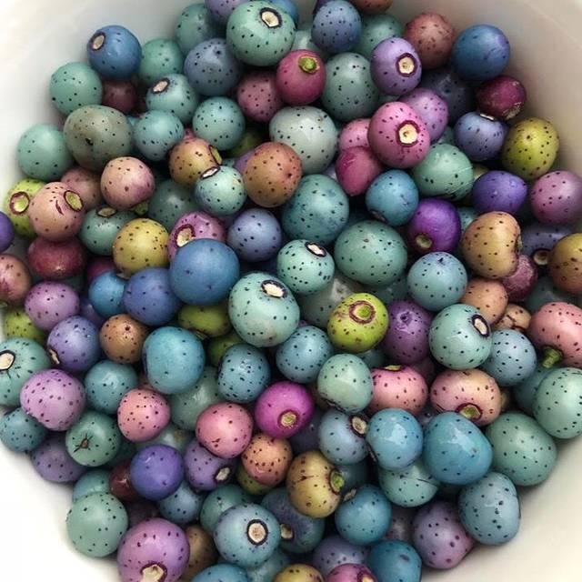 Amur Peppervine (porcelain berry) - Honey Badger, Brooklyn, NY
