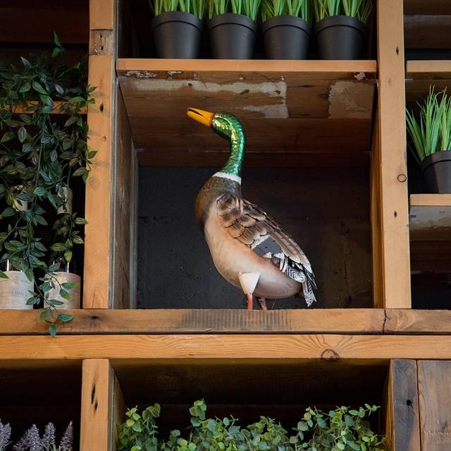 Monsieur Le Duck, London