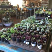 photo of succulents & wine restaurant