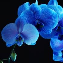 photo of blue orchid thai cuisine restaurant