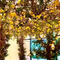 photo of mandolina restaurant