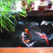 foto von wakamono restaurant