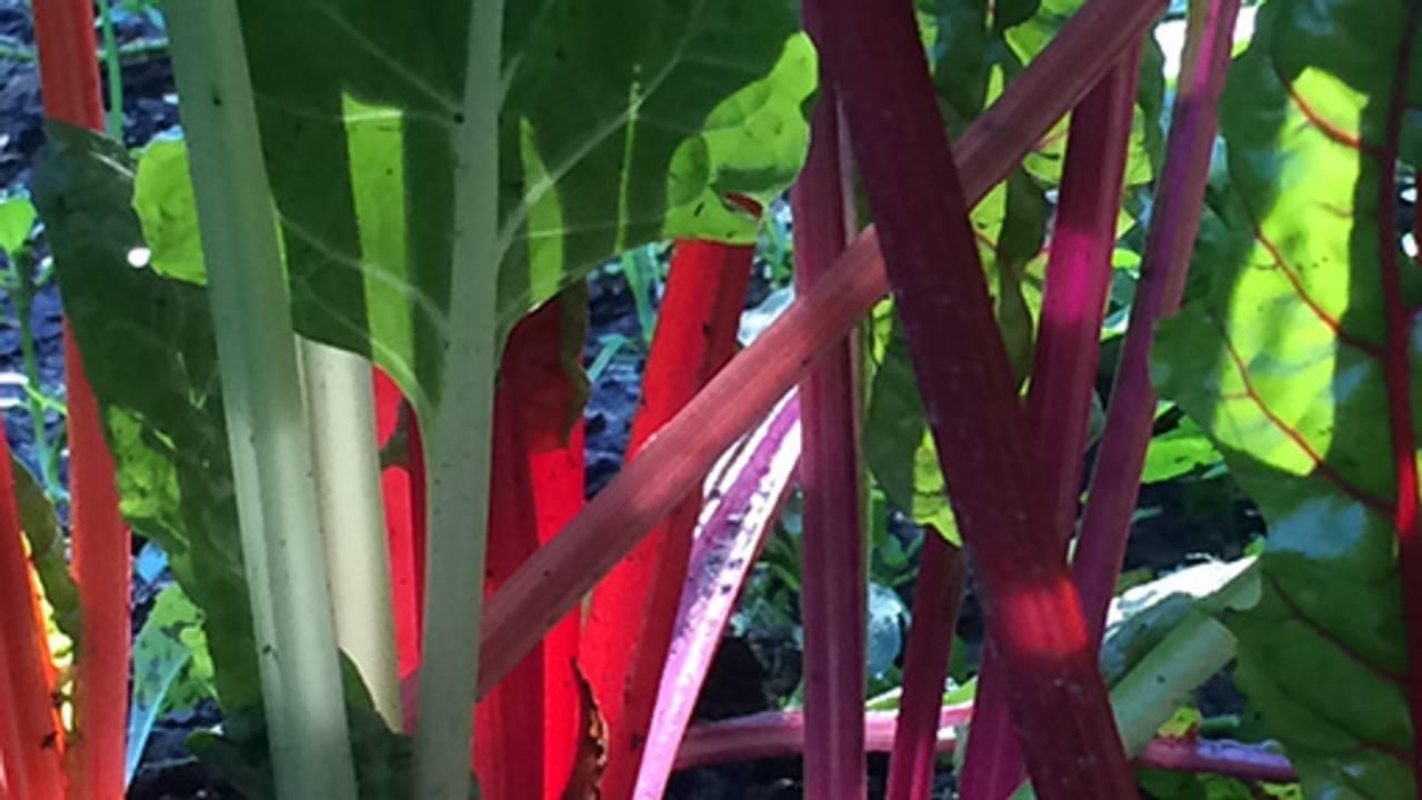 Three Tomatoes Trattoria Restaurant - Lebanon, NH | OpenTable
