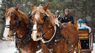 Sleigh Ride at Lone Mountain Ranch