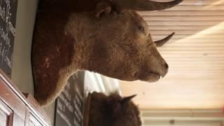 The Bull & Last