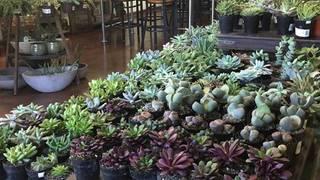 Succulents & Wine