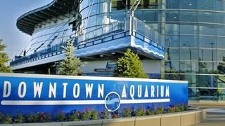 Aquarium Restaurant - Downtown Denver